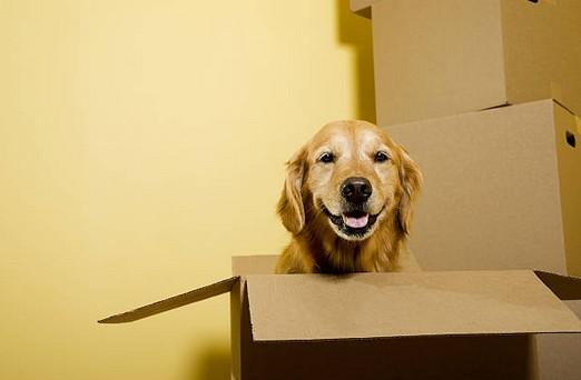 Comment déménager avec son animal de compagnie ?