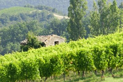 maison dans les vignes